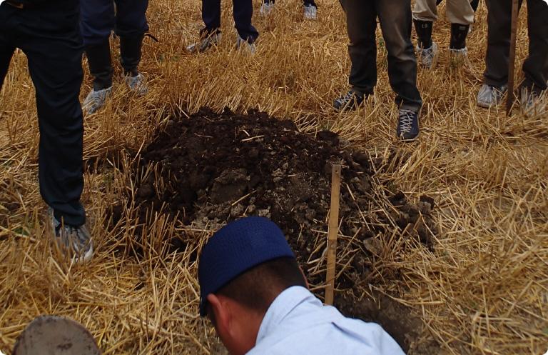 土壌診断からの施肥設計